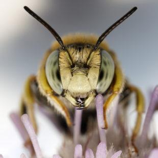 portrait of a little bee