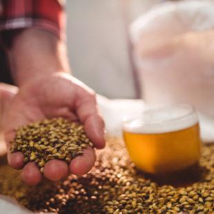 Bière artisanale: une allergie pas banale
