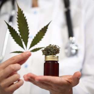 medical marijuana in the hand of a doctor. cannabis alternative medicine