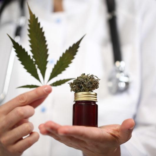 medical marijuana in the hand of a doctor. cannabis alternative medicine