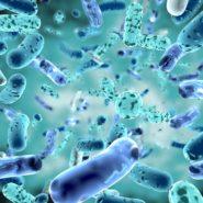 bifidobacterium, bacterial strain3d illustration.